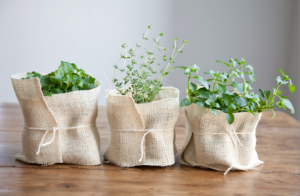 boxwood-clippings_new-home-herb-gift-e1367443250896
